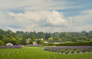 Woodinville Lavender Lifewater Gathering