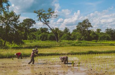 Cambodia water crisis
